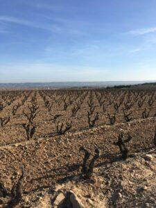 Halfes wijnstreek Rioja Spanje
