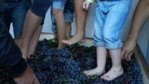 aglianico wijn druif Italie