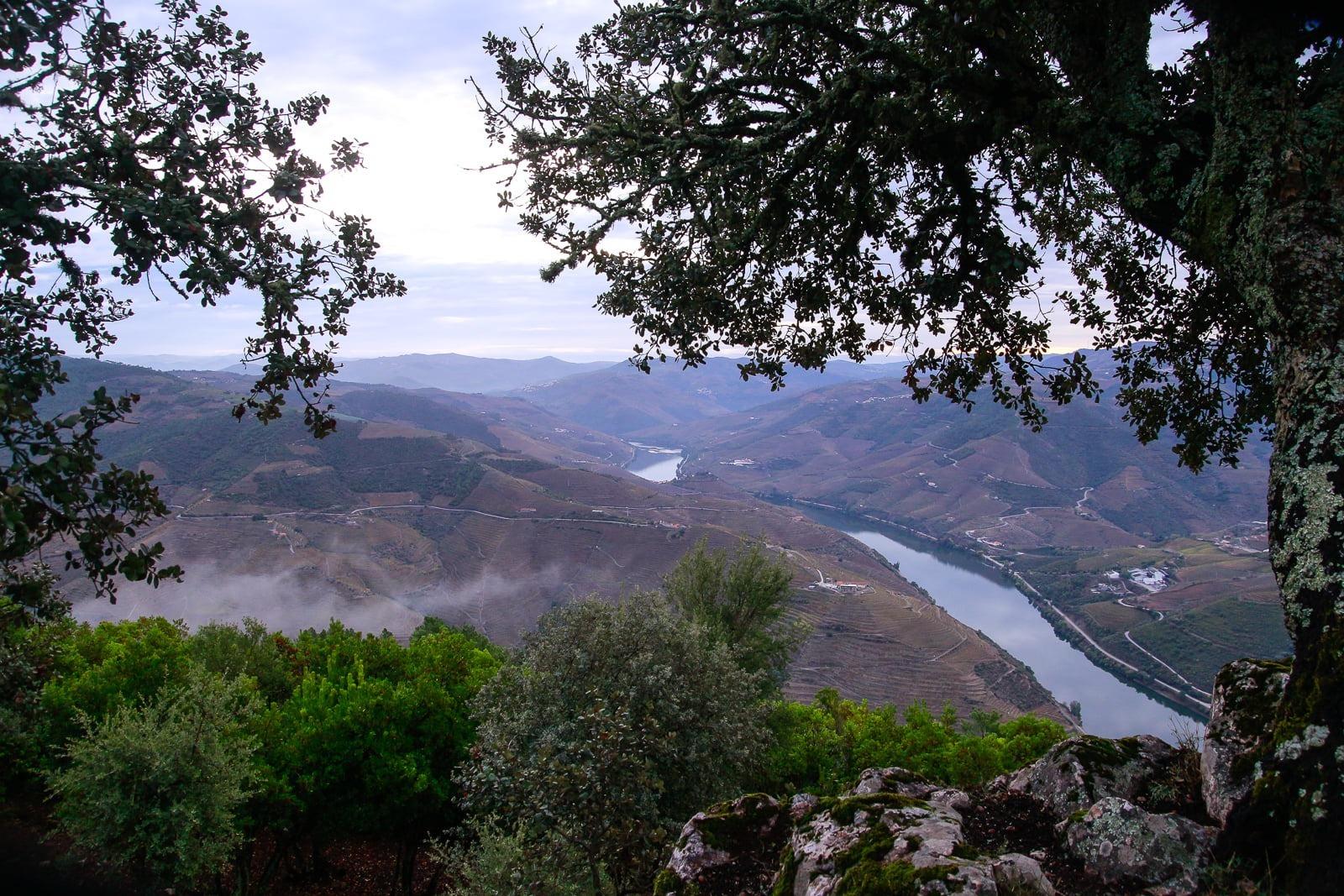 De Douro Dourovallei port rode wijnen