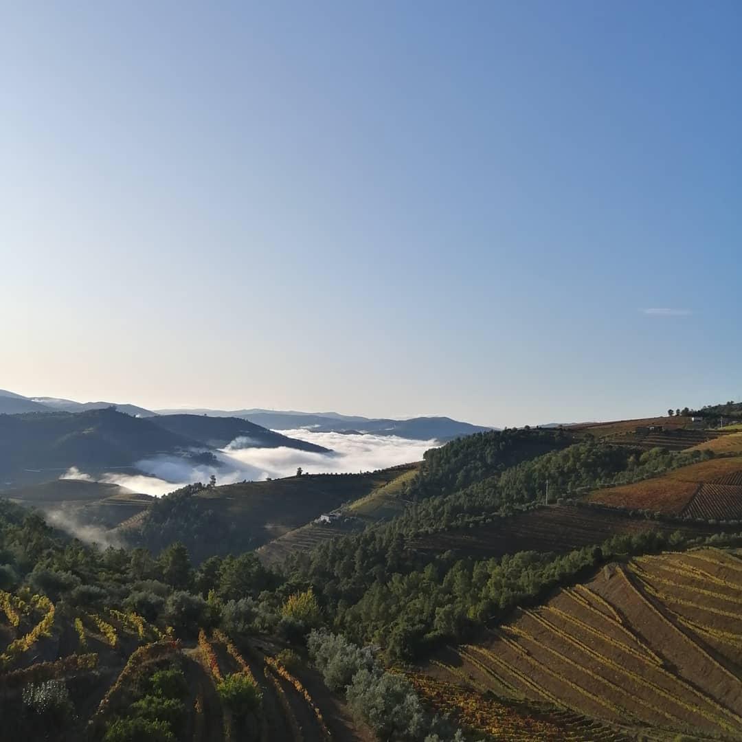 Douro wijnbouw terrassen rode wijn port Teoria wijngaard Halfes kleine fles wijn 375ml