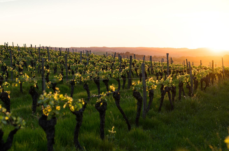 Kleine flessen wijn mini 375ml Italiaanse wijn rode witte Halfes rosé wijntje