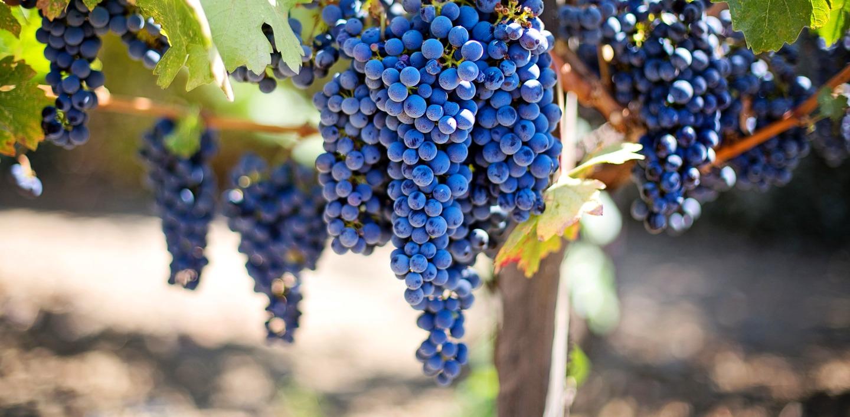 Halfes kleine mini fles rode wijn witte rosé Frankrijk cabernet sauvigon