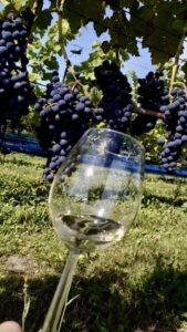 Nederlandse rode wijn Halfes kleine fles wijn 375ml