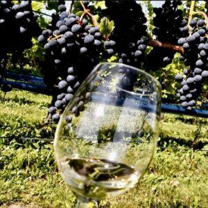 regentdruif Nederland glas wijn druiven
