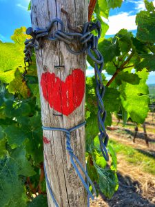 wijngaarden hartje