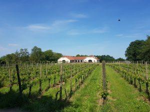 Wijnhoeve Colonjes Groesbeek Gelderland wijngaard
