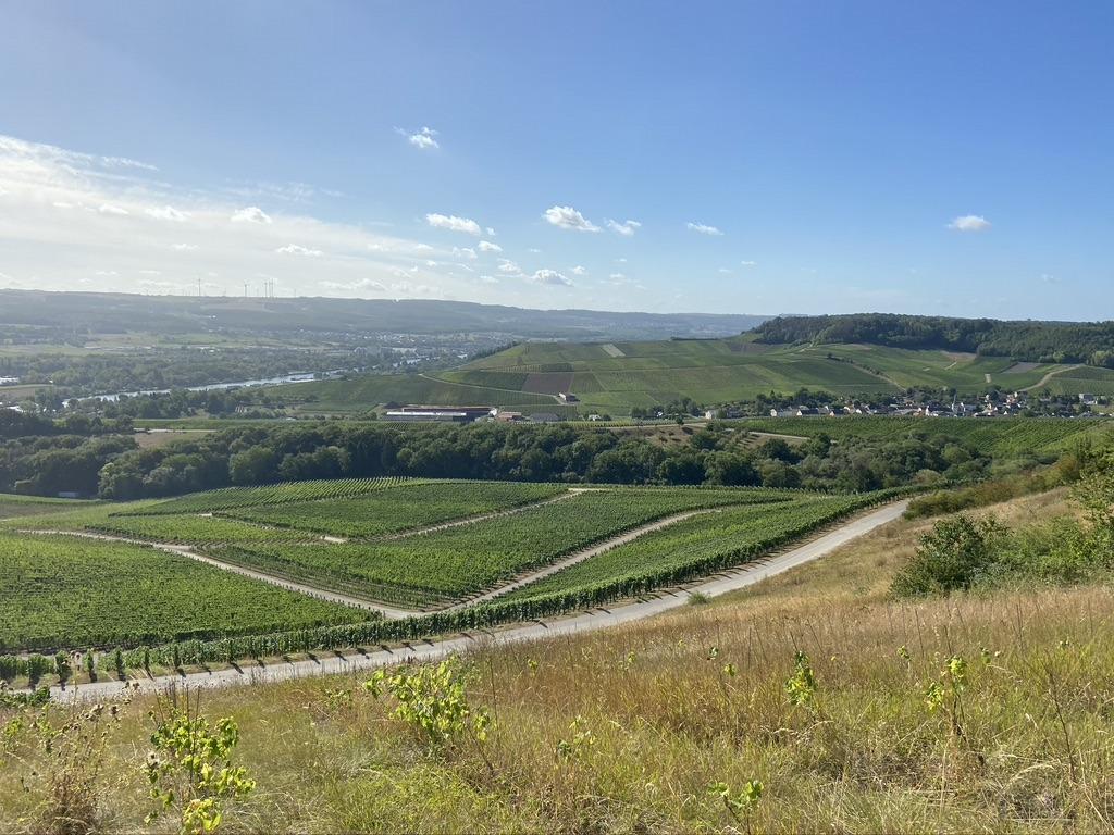 Luxemburgse wijngaarden Schengen