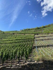 Wijngaarden Ahr