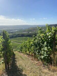 Wijngaarden Moezel Luxemburg