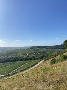 Wijngaarden Luxemburg
