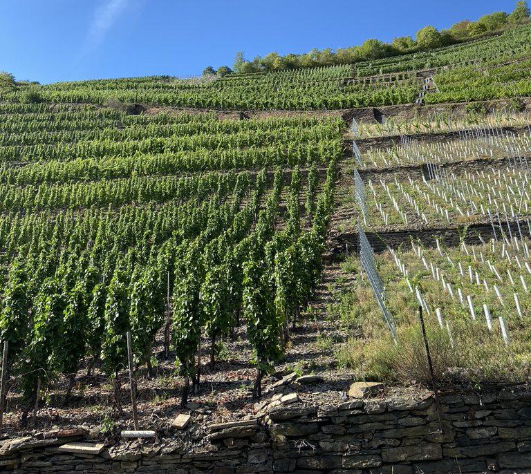wijngaarden duitsland Duitse wijn