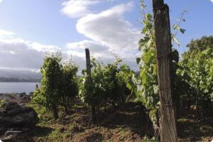 Antonio Montero vineyard